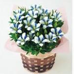 りんどうの花言葉と由来!敬老の日にピッタリな花!